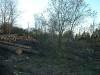 Park Logs2