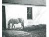 horse-at-sidehead