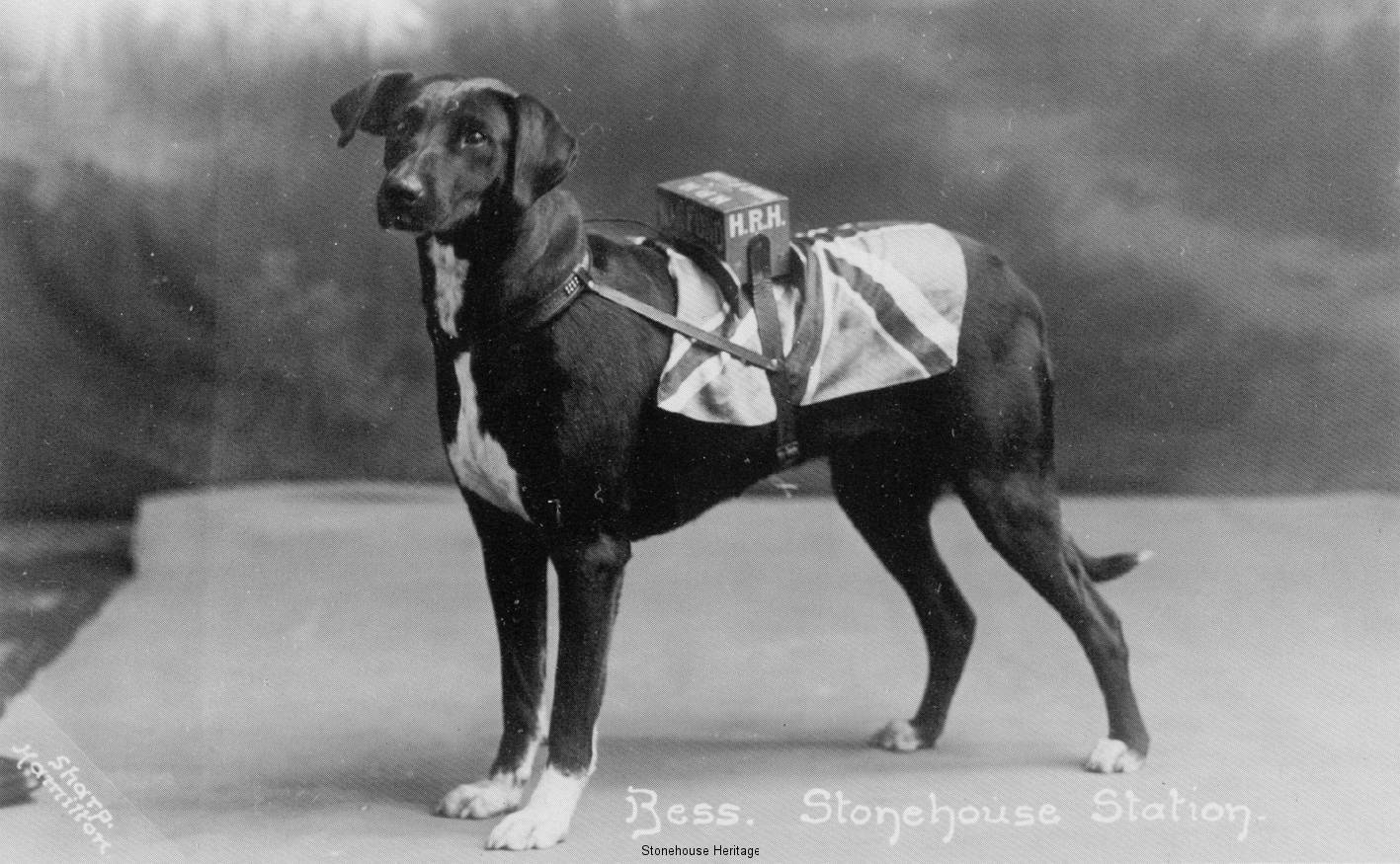 bess-station-dog